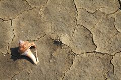 Soil cracked texture near the sea. Soil cracked texture with sea shell ,at the sea side Thailand Royalty Free Stock Photography