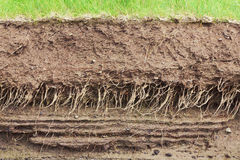 Soil cross section Stock Images