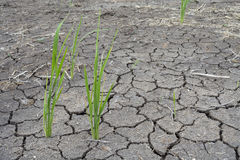 Soil drought cracked Stock Images