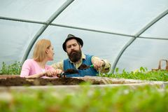 Soil enrichment. soil enrichment with organic fertile. soil enrichment concept. soil enrichment by couple of gardeners. Living a green life royalty free stock photo