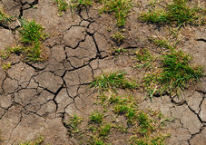 Soil erosion. Cracks in the dry land, the earth wants water Royalty Free Stock Photography