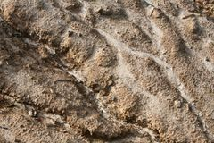 Soil erosion Royalty Free Stock Photography
