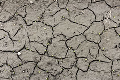 Soil erosion Royalty Free Stock Image