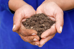 Soil. Female hand holding soil in her palm Stock Images