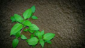 Soil fertility to plants. Plants is need of arable land Royalty Free Stock Photo
