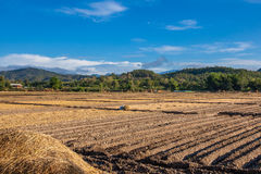 Soil on field agriculture in thailand Royalty Free Stock Photos