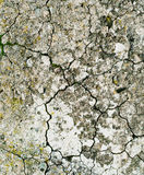 Soil with fissures Royalty Free Stock Photo