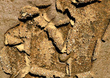 Soil floor. View of a dry soil that is a direct consequence of global warming favoring the instability of the soil which is a factor conducive to the appearance Royalty Free Stock Images