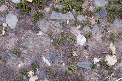 The soil in the flower bed for growing flowers and plants. Land. royalty free stock photography