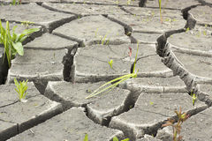 Soil and grass during drought cracks. In the land of drought Royalty Free Stock Photography