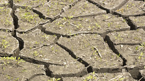 Soil and grass during drought cracks. In the land of drought Stock Photos