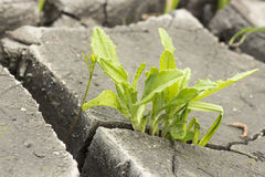 Soil and grass during drought cracks. In the land of drought Stock Photo