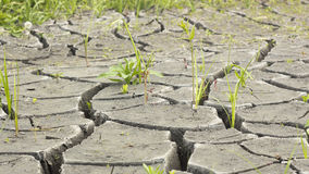 Soil and grass during drought cracks. In the land of drought Royalty Free Stock Images
