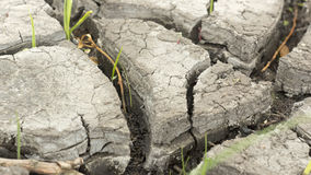 Soil and grass during drought cracks. In the land of drought Stock Photography