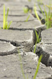 Soil and grass during drought cracks. In the land of drought Stock Images
