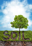Soil and grass under  tree. Environment concept with a grassy area and the words soil to reveal the ground beneath the tree Royalty Free Stock Image