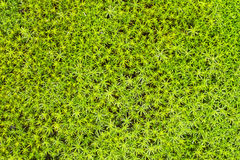 Soil with green northern moss - background Stock Photo