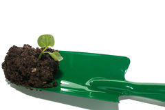 Soil with green seedling Stock Photography