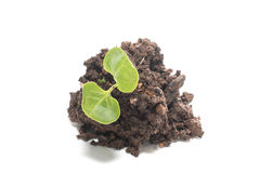 Soil with green seedling Stock Photos
