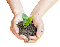 Soil and green sprout in farmer hands Royalty Free Stock Photo