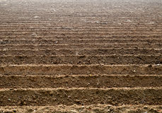 Soil grooves farm lands. Stock Images
