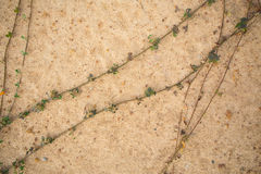 Soil ground Stock Photography