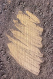 Soil for growing plants on wood Royalty Free Stock Photo