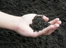 Soil in hand. Hand holding healthy soil. Other versions available in my portfolio Stock Photos
