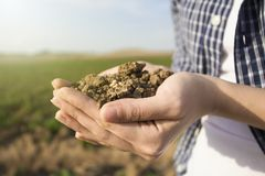 Soil in hand, palm, cultivated dirt, earth, ground, brown land background. Organic gardening, agriculture. Environmental texture. Soil in hand, palm, cultivated stock image