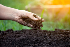 Soil in hand. For planting Royalty Free Stock Images