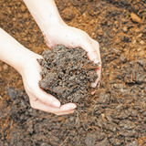Soil- handful Stock Photography