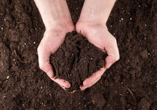 Soil in hands. Bunch of good soil in hands on ground background Royalty Free Stock Photos