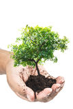 Soil in hands , Hands dirty with clay with tree on white background.  Stock Image