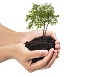 Soil in hands , Hands dirty with clay with tree on white background.  Stock Images