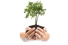 Soil in hands , Hands dirty with clay with tree on white background.  Stock Photography