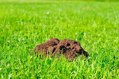 Soil hill Royalty Free Stock Image