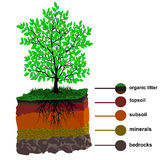 Soil Layer And Tree Stock Photos