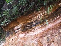 Soil layers at tea plantation Royalty Free Stock Photography