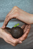 Soil with little seeding in woman hands in form of earth planet, ecology concept. Royalty Free Stock Photography