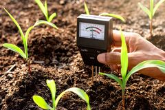 Free Soil Meter Is Used On Loam For Planting, Measure Soil Acidity. Stock Photo - 185001580