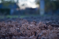Soil is a natural clay minerals are naturally many species suita Stock Photo