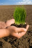 Soil with new growth plamt. Hands holding soil new growth plant Stock Photos