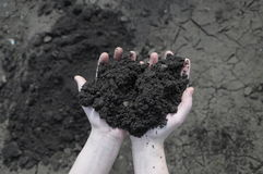 Soil in the open palm Royalty Free Stock Photos