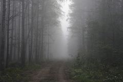 Soil path in the wood and fog early in the morning.  Royalty Free Stock Image