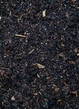 Soil peat consists of a set of the vegetable remains, sand. Excellent texture for the image stock images