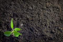Soil and plant background Stock Images