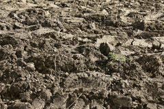 Soil in the ploughed field Stock Photography