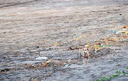 Soil Pollution - A Puppy Standing among and Looking at Garbage Royalty Free Stock Image