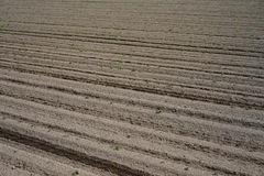 Soil preparation in Argiculture Stock Photography