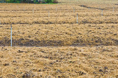 Soil preparation land for vegetable cultivation Royalty Free Stock Image